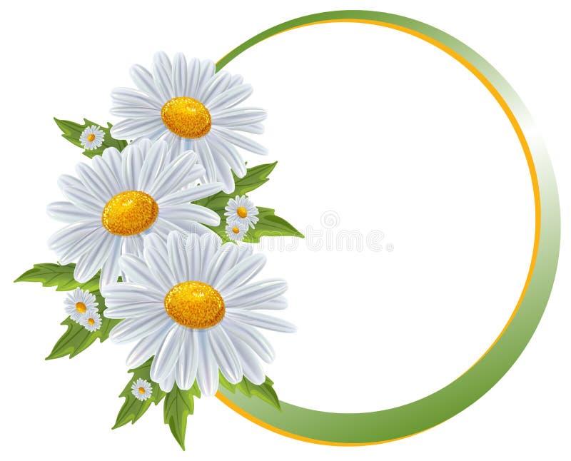Fronteras de la flor. Manzanilla del ramo aislada. stock de ilustración