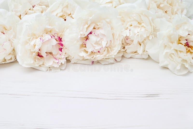 Frontière blanche de pivoines sur le fond en bois blanc Copiez l'espace, dessus photographie stock libre de droits