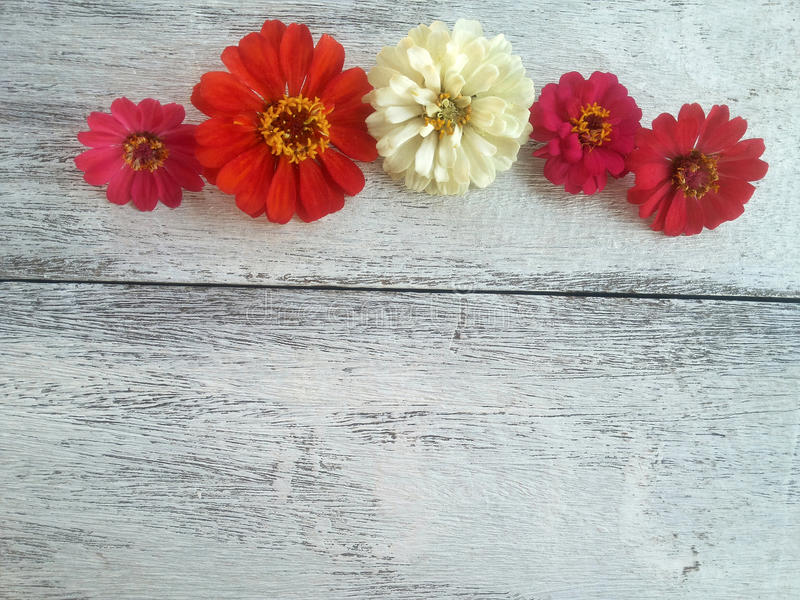 frontière colorée de fleurs sur le fond en bois blanc photographie stock libre de droits