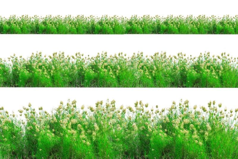 Frontière d'herbe verte d'isolement sur le fond blanc photographie stock libre de droits