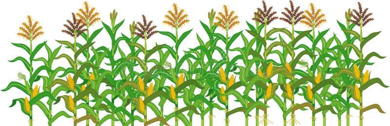 Frontière d'usine d'agriculture avec le champ de maïs images stock