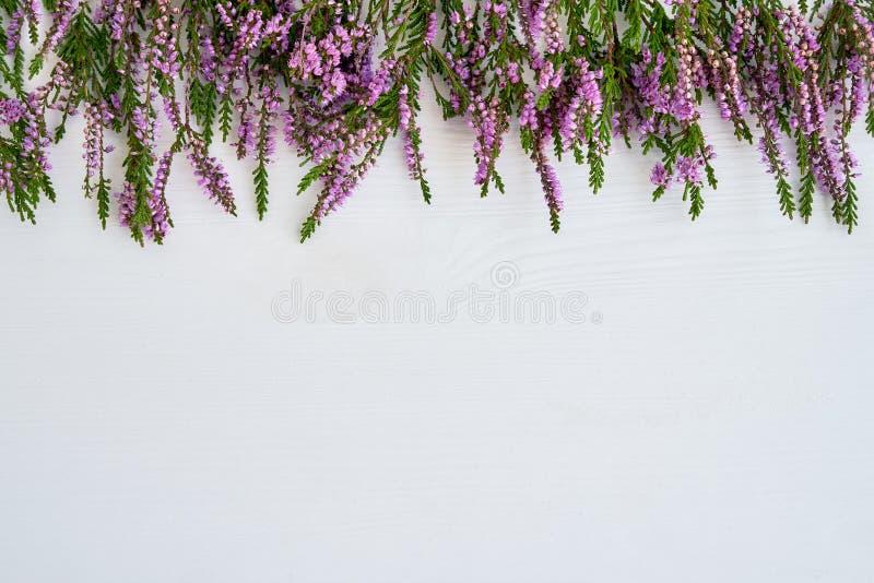 Frontière de bruyère commune sur le fond blanc Copiez l'espace, le principal vi photographie stock libre de droits