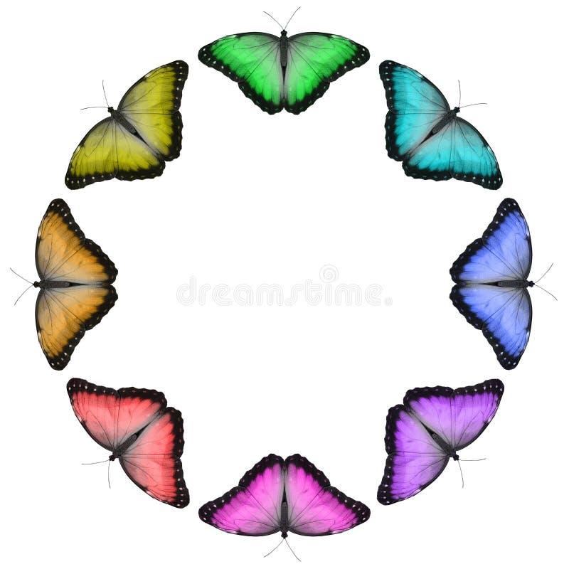 Frontière de papillon colorée par arc-en-ciel circulaire images libres de droits