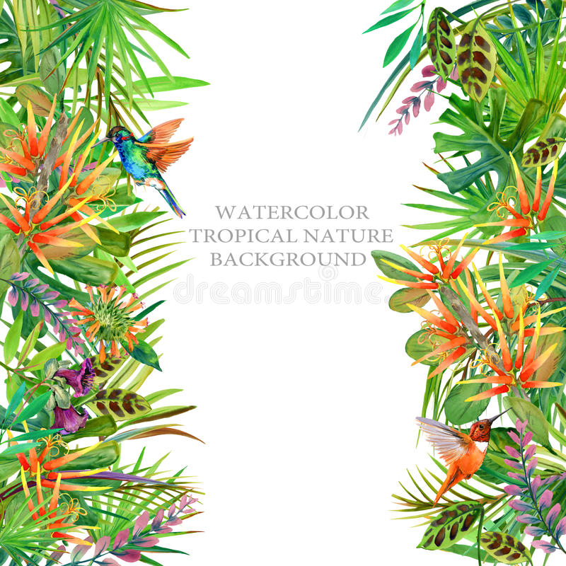 Frontière de paradis usine de jungle, colibri et illustration d'aquarelle de fleurs illustration libre de droits