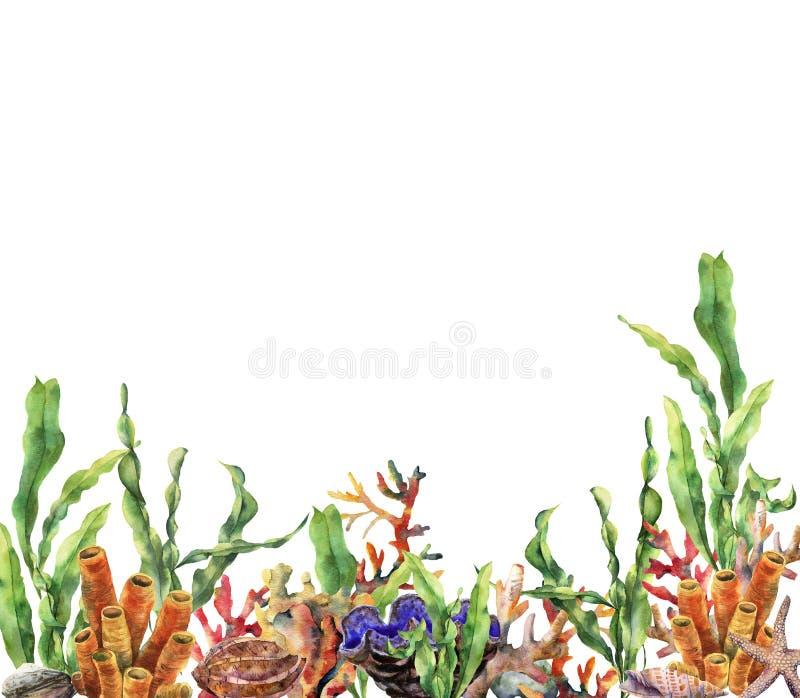 Frontière de récif coralien d'aquarelle Illustration sous-marine peinte à la main avec la branche de laminaria, étoile de mer, tr illustration stock