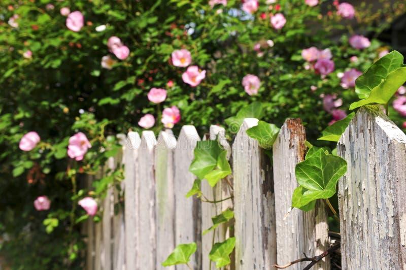 Frontière de sécurité de jardin avec des roses photographie stock libre de droits