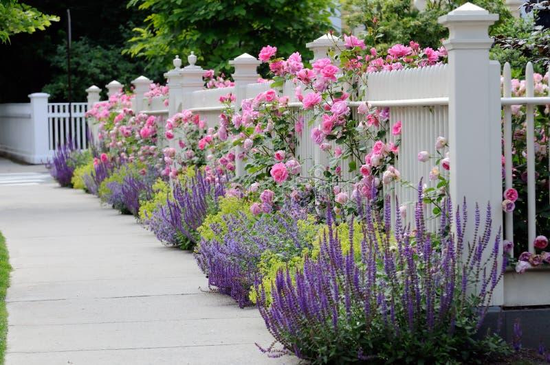 Frontière de sécurité de jardin avec des roses image stock
