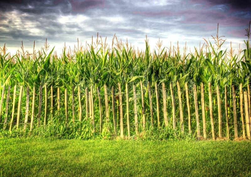 Frontière de sécurité devant la zone de maïs photos libres de droits