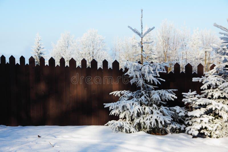 Frontière de sécurité et arbres de conte de fées dans la neige photographie stock libre de droits