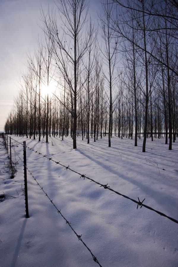 Frontière de sécurité par le verger neigeux. photo libre de droits