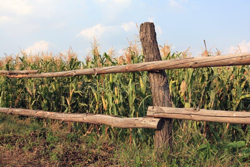Frontière de sécurité près de fild de maïs photographie stock