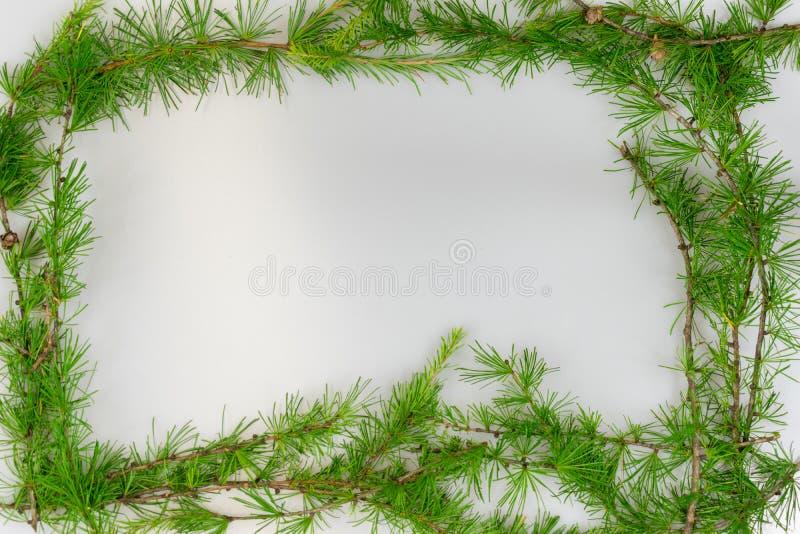 Frontière des branches de mélèze avec l'espace de copie photo stock