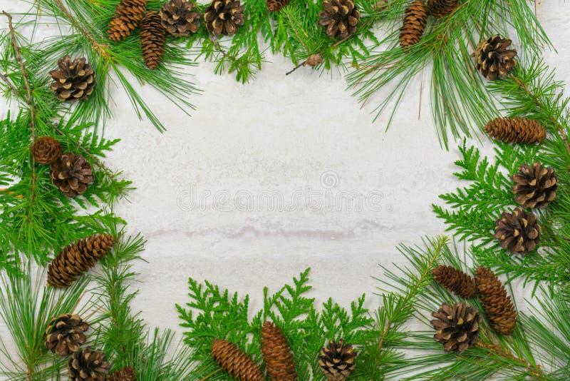Frontière des branches et des cônes à feuilles persistantes de pin, photographie stock libre de droits