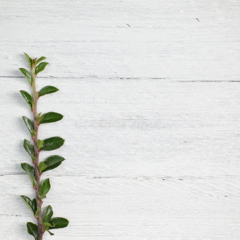 Frontière des feuilles vertes fraîches image stock