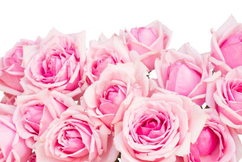 Frontière des roses roses de jardin image libre de droits
