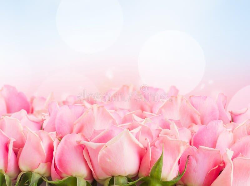 Frontière des roses roses de jardin images stock