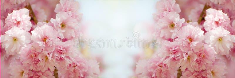 Frontière florale avec beau Sakura fleurissant pendant le jour ensoleillé Bannière romantique avec des fleurs sur le fond de boke photos libres de droits
