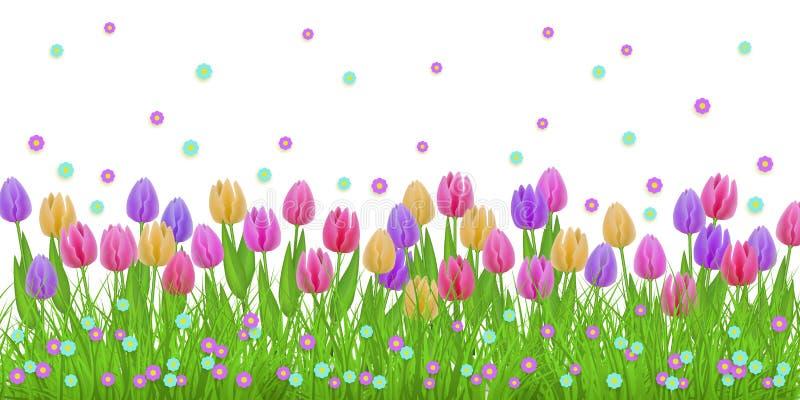 Frontière florale de ressort avec les tulipes colorées et les petites fleurs sur l'herbe verte d'isolement sur le fond blanc illustration de vecteur