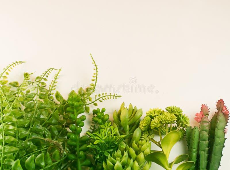 Frontière fraîche de vert de nature de jardin succulent de cactus de groupe d'usine photo stock