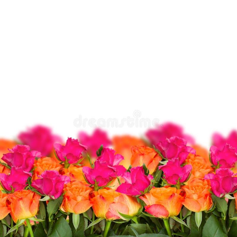 Frontière orange et rose de roses photos libres de droits