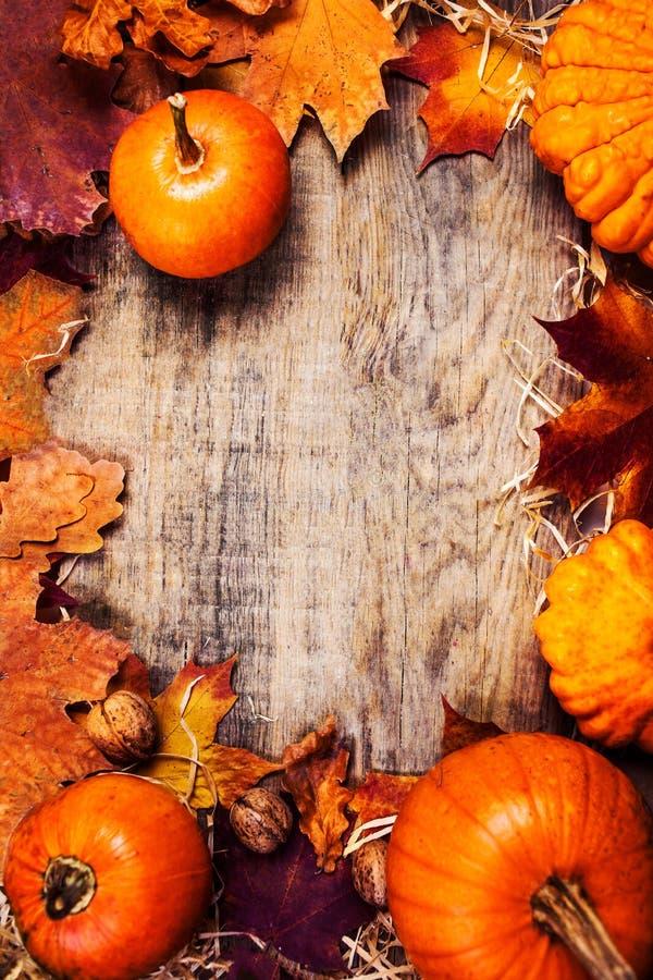 Frontière ou cadre avec les potirons oranges et coloré de thanksgiving photographie stock libre de droits