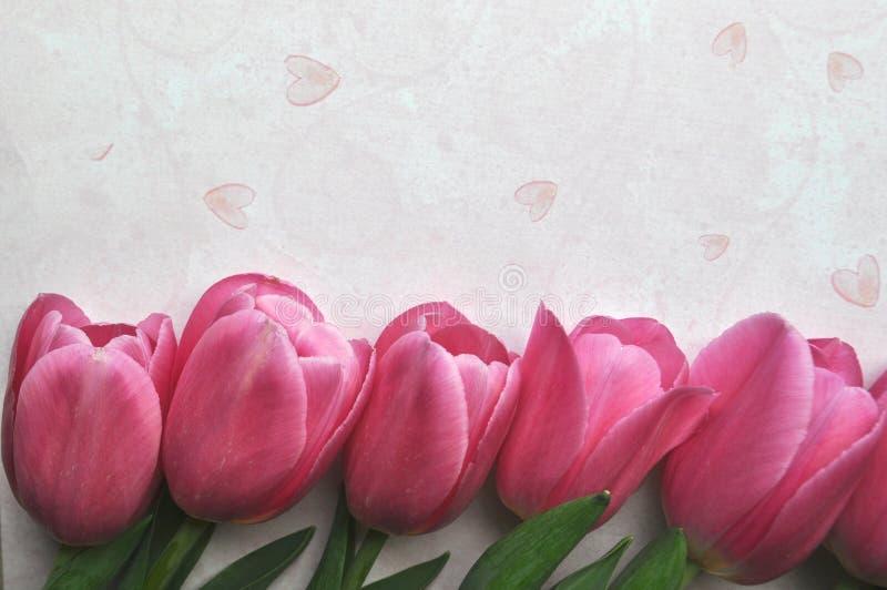 Frontière rose lumineuse de fleur de tulipe sur le fond rose de coeur avec l'espace des textes et de copie images libres de droits