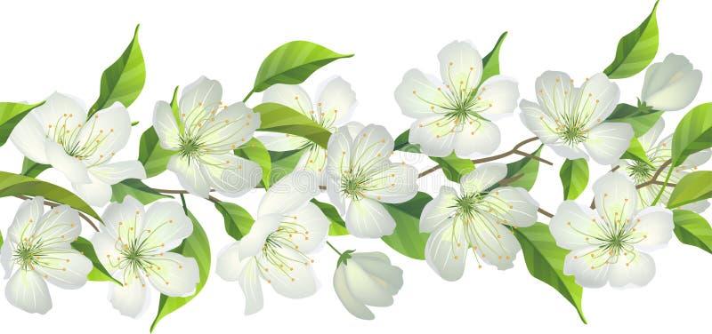 Frontière sans couture avec l'arbre de floraison illustration libre de droits