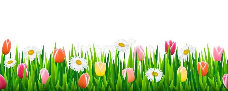 Frontière sans couture avec l'herbe et les fleurs illustration de vecteur