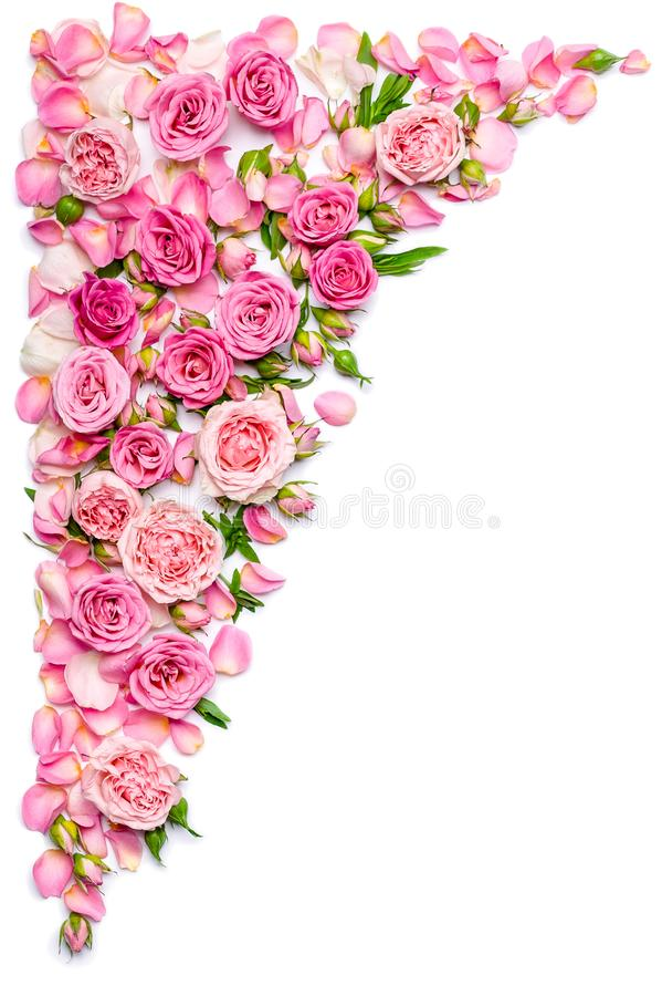 Frontière verticale des roses fraîches sur un fond blanc Mariage ou thème de jour de valentines photos stock