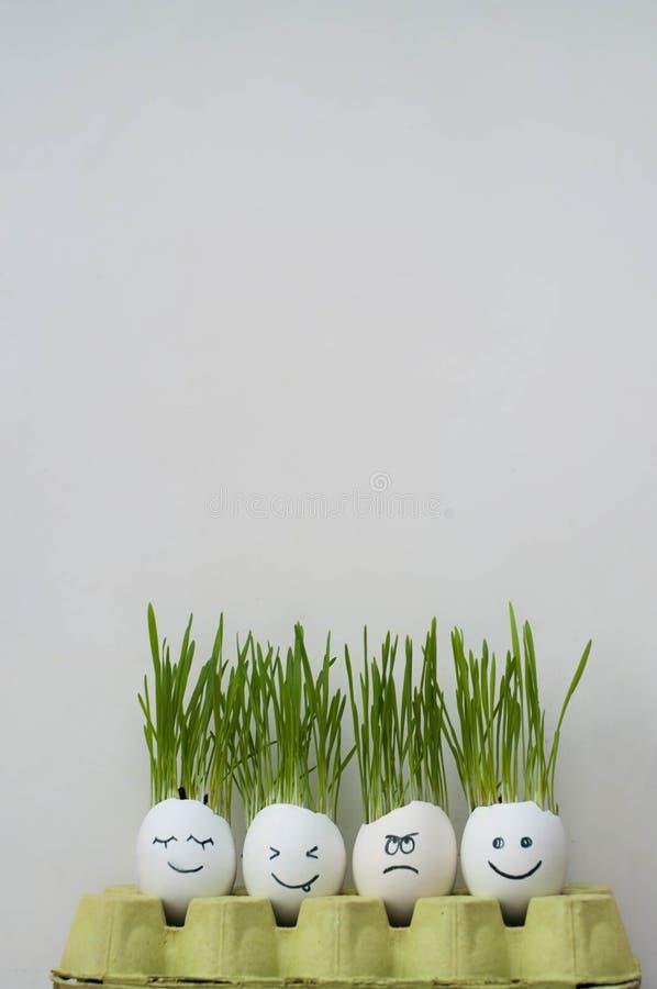 Fronti tirati felici ed arrabbiati divertenti sulle coperture dell'uovo con le fughe crescenti di wheatg immagini stock