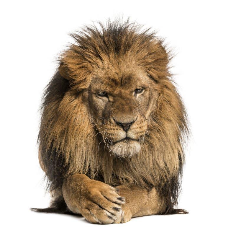 Frontowy widok lwa lying on the beach, skrzyżowanie łapy, Panthera Leo zdjęcie stock