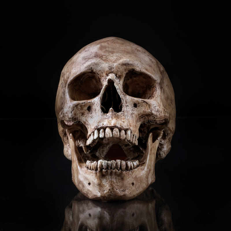 Free Frontview Human Skull Open Mouth Isolated Stock Photos - 40769363