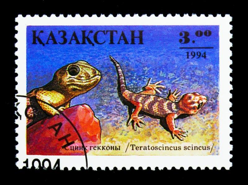 Frosch-äugiger Gecko (Teratoscincus-Scincus), Reptil serie, circa 19 stockbilder
