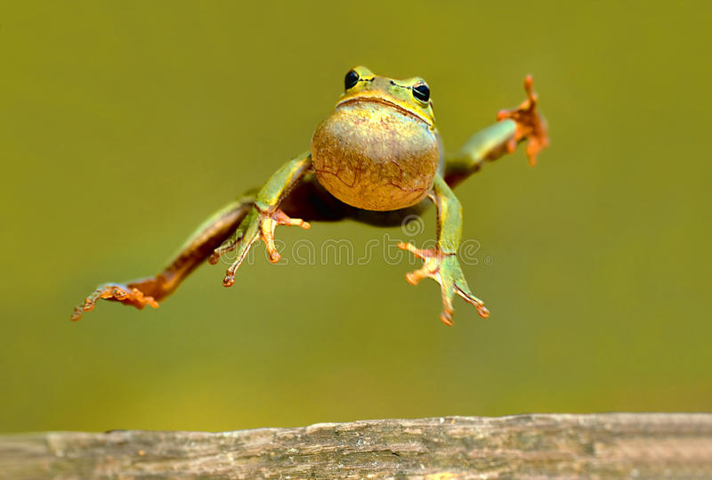 Frosch stockfotos