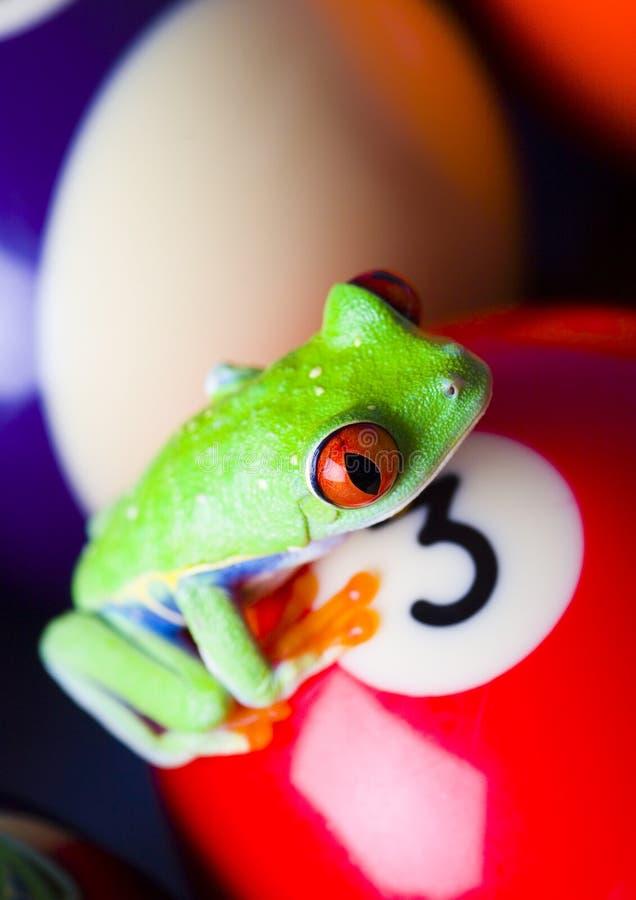 Frosch auf den Kugeln stockbild