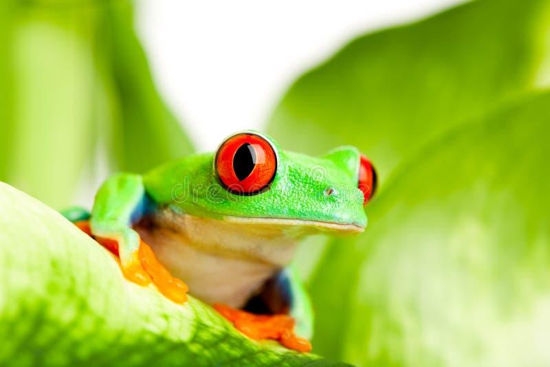 Frosch auf einem Blatt lizenzfreie stockfotos