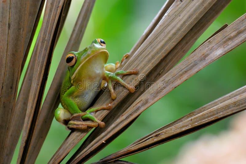 Frosch auf einem Blatt stockfotografie