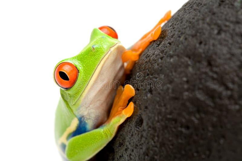 Frosch auf einem Felsen lizenzfreies stockbild