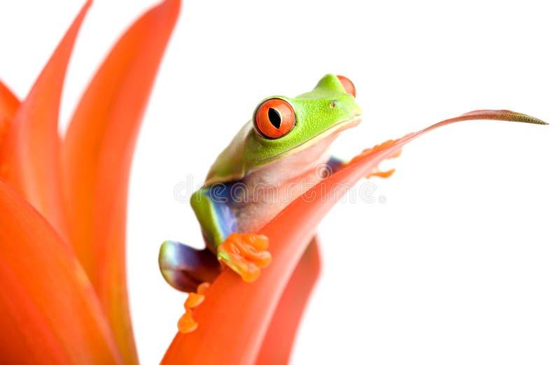 Frosch auf einer Anlage lizenzfreies stockbild