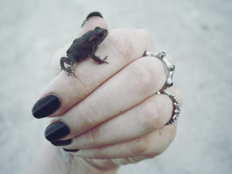 Frosch auf einer Hand stockbild