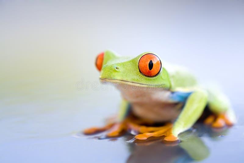 Frosch Auf Nasser Metallnahaufnahme Stockfotos