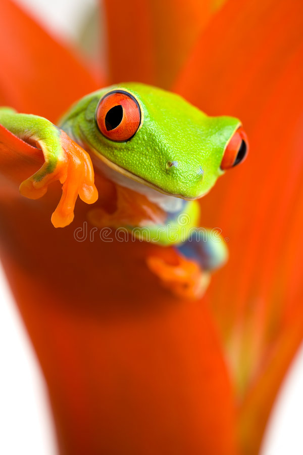 Frosch, der auf Anlage kühlt lizenzfreies stockfoto