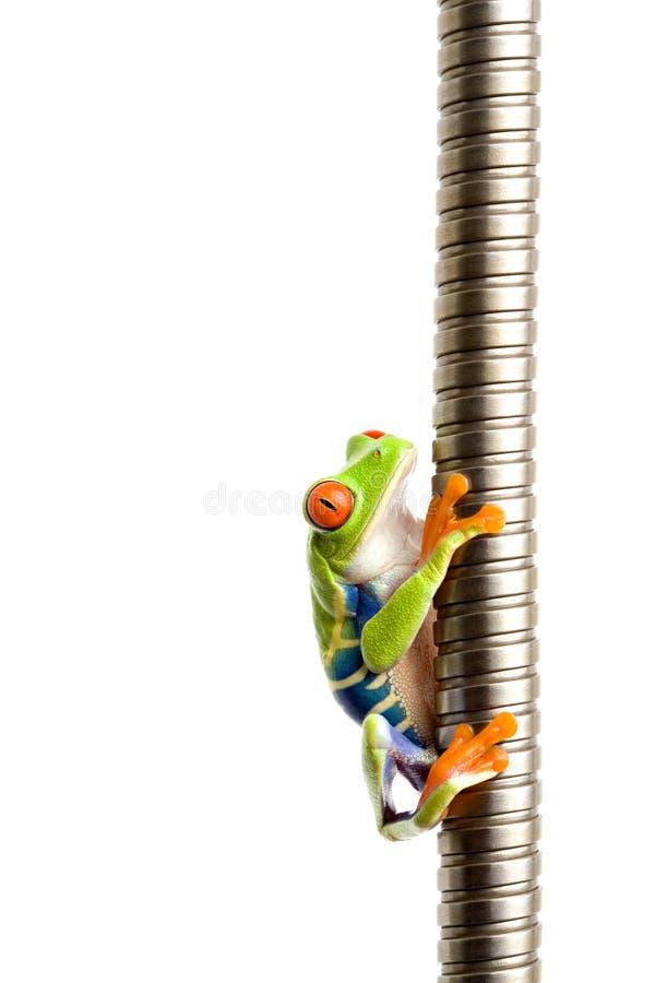 Frosch, der auf Metalisolat steigt stockfoto