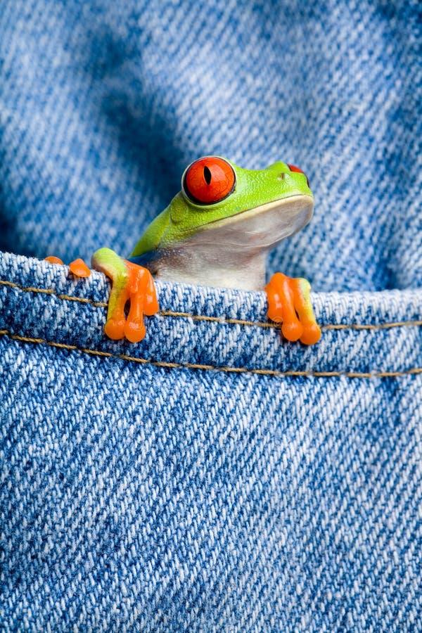 Frosch in der Tasche lizenzfreies stockfoto