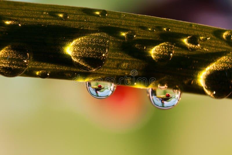 Frosch in einem Regentropfen stockfoto