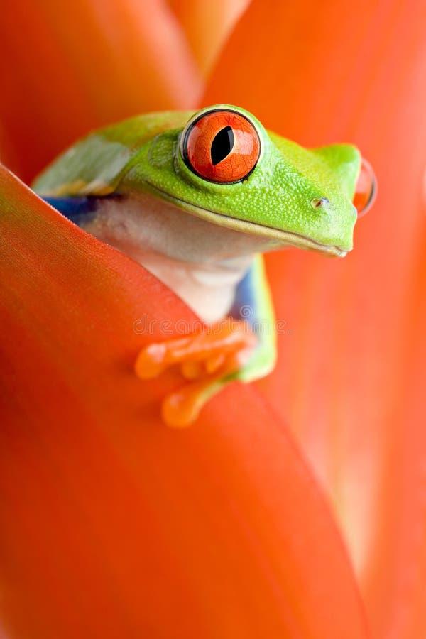 Frosch in einer Anlage stockfotos