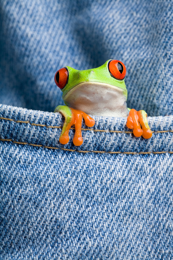 Frosch in einer Tasche lizenzfreie stockfotografie
