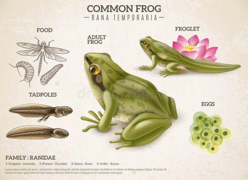 Frosch-Lebenszyklus-Retro- Plakat vektor abbildung