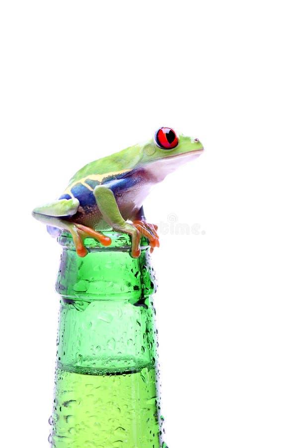 Frosch mit der Flasche getrennt auf Weiß lizenzfreies stockfoto