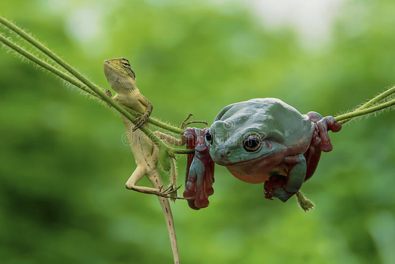 Frosch und Eidechse stockbilder